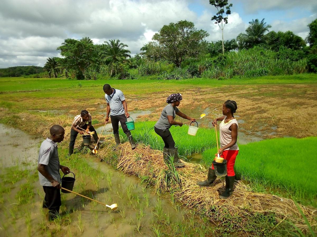 Community Health Volunteers collecting larvae, Liberia, 2018