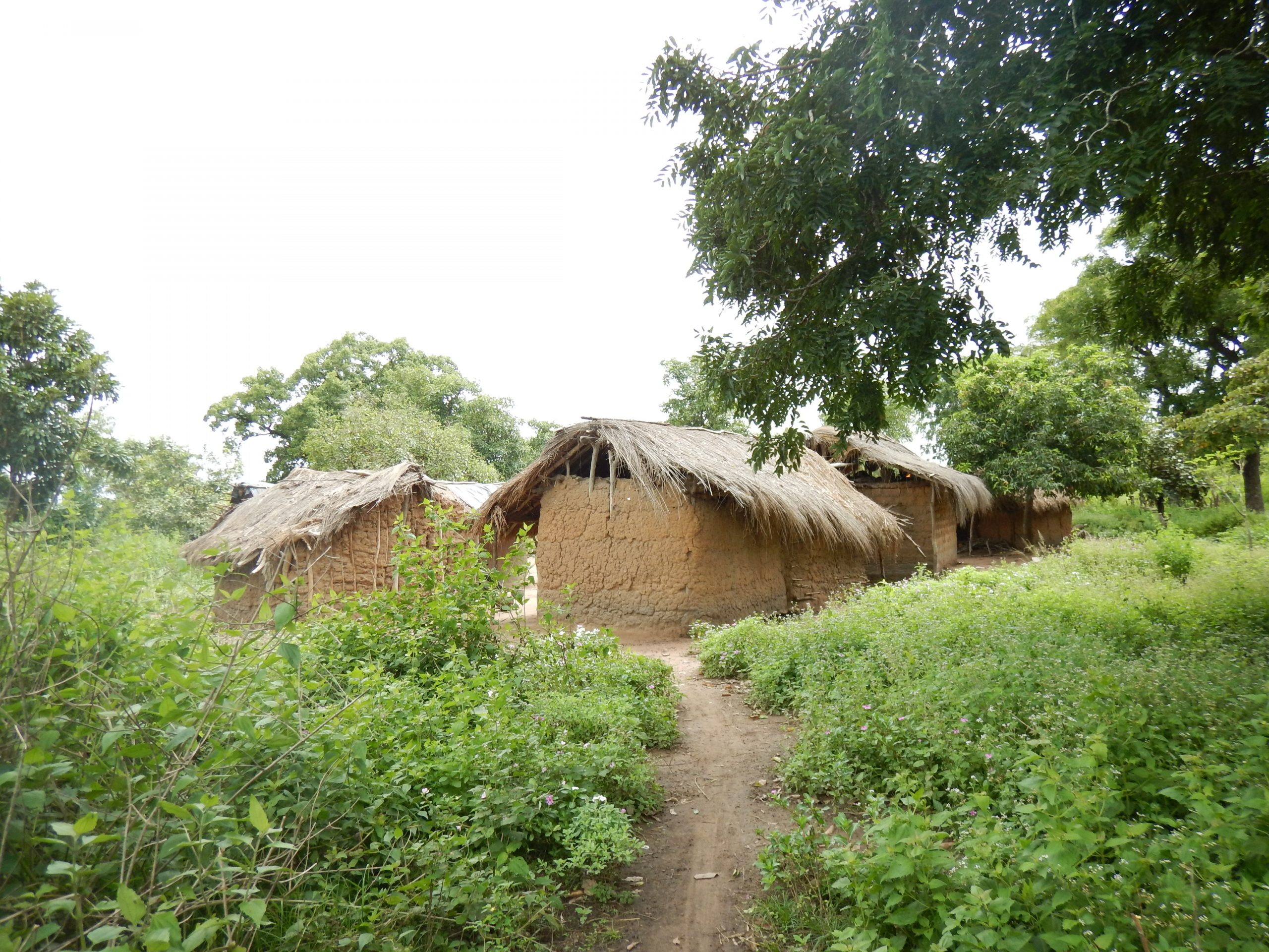 Dirt road leading to huts within green foliage